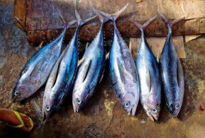 Pescado azul y y colesterol