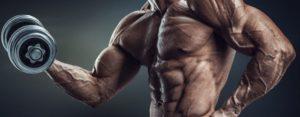 glutamina y musculos