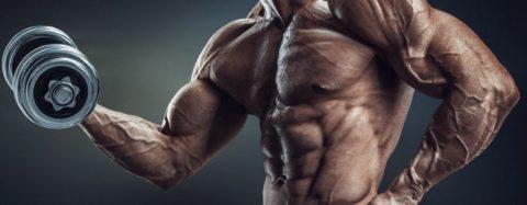 La glutamina no construye musculo