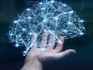 el cerebro y la dihydroxiflavona
