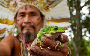 medicina de la rana