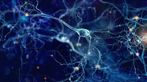 Uridina y neuronas